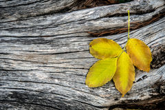 Autumn leaf on a wooden background Stock Images