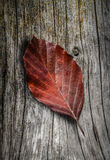 Autumn Leaf On Wooden Background Stock Images