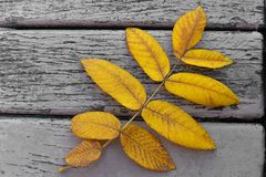 Autumn leaf. On the wooden bench Royalty Free Stock Images