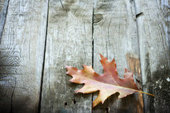 Autumn leaf on wooden boards Stock Image