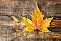 Autumn leaf. On wooden boards Stock Photos