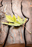 Autumn leaf on a wooden table Stock Image