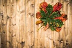 Autumn Leaf On Worn Wood bakgrund Royaltyfria Foton