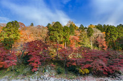 Autumn Leaf y río coloridos con el cielo azul Imagenes de archivo