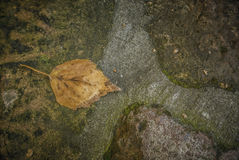 Autumn Leaf. A yellow fallen leaf on a stone floor Stock Photography