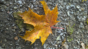 Autumn Leaf. Yellow autumn leaves on a gravel road. Picture taken with mobile phone royalty free stock photography