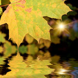 The autumn leafage Royalty Free Stock Photos
