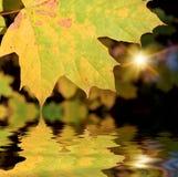 The autumn leafage. The autumn sunshine though maple leafage near lake Royalty Free Stock Photos