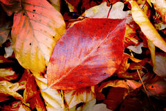 Autumn leafage. Absreact natural background Stock Photography