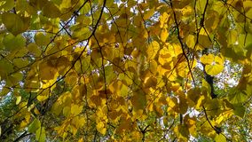 Autumn leafage Stock Image