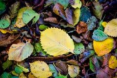Autumn leafage background Stock Image