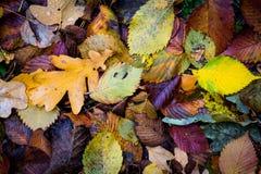 Autumn leafage background Stock Photo