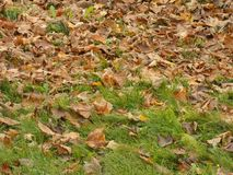 Autumn leafage foliage - fallen leaves on the lawn fall Stock Photography