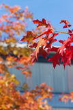 Autumn leafage Stock Images