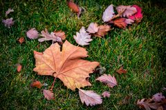Autumn leafage on grass. Dry Autumn leafage on green grass Royalty Free Stock Photos