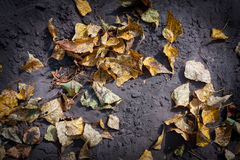 Autumn leafage. On ground - abstract natural background Royalty Free Stock Photography