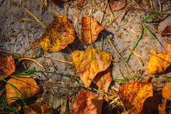 Autumn leafage on soil Stock Photo