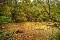 Autumn Leafage on Water Level. Autumn Foliage on Water Level Stock Photos