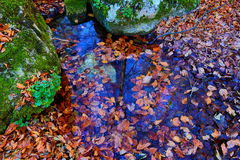 Autumn leafage in water. Scene with autumn leafage in water Stock Images