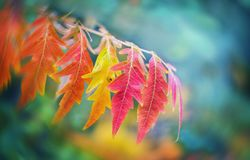 Autumn leafes on blurred background, very shallow focus. Colorfu Royalty Free Stock Photography