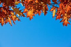 Autumn leafes Royalty Free Stock Images