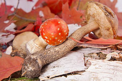 Autumn  leafes and mushrooms Stock Photography