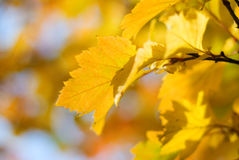 Autumn leafes shallow DOF Stock Images
