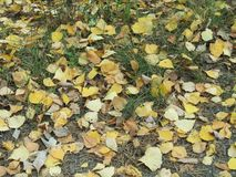Autumn leafes Stock Photos