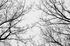 Autumn leafless branches of trees. Silhouette autumn leafless branches of trees royalty free stock photo