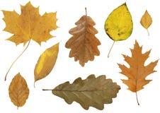 Autumn leafs Stock Image