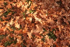 Autumn leafs. Autumn background of many leafs Stock Photos