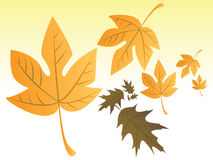 Autumn leafs. Some autumn leafs in space - illustration Royalty Free Stock Photos