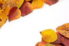 Autumn leafs. Royalty Free Stock Photos