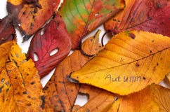 Autumn leafs. Stock Photos