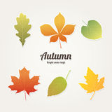 Autumn leafs. Autumn, bright vector leafs for you designs Royalty Free Stock Image