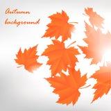 Autumn leafs. Background. Vector fall design vector illustration