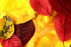 Autumn leafs... stock photography