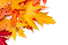 Autumn leafs Royalty Free Stock Photos