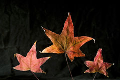 autumn leafs Стоковое Изображение RF