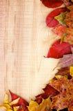 Autumn Leafs Arkivbilder