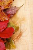 Autumn Leafs Arkivfoton
