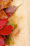 Autumn Leafs stockfotos