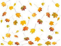 Free Autumn Leafs Royalty Free Stock Photography - 3801147
