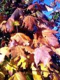 Autumn leafs Stock Photos