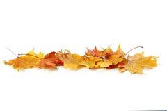 Free Autumn Leafs Stock Image - 62316541