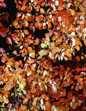 Autumn Leafs. In Park Royalty Free Stock Photos