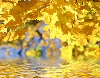 Autumn leafs above the water. Fall background Royalty Free Stock Images