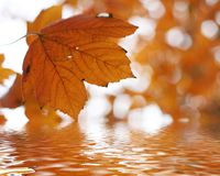Autumn leafs above the water Royalty Free Stock Photos