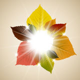 Autumn leafs abstract background Stock Images
