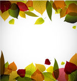 Autumn leafs abstract background Stock Photo
